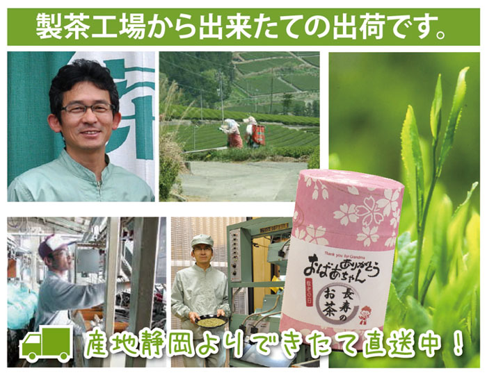 製茶工場から直送
